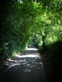 Tadpole Lane