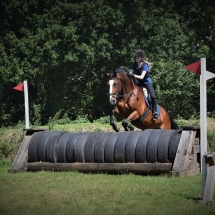 Castor 16.2hh Bay Irish Sports Horse