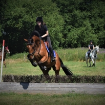 Sugar 16.1hh Bay Irish Sports Horse